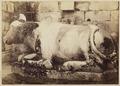 KITLV 40179 - Kassian Céphas - Nandi in Nandi temple of Prambanan Tjandi - 1889-1890.tif