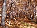 KapusanyCastle11Slovakia38.jpg
