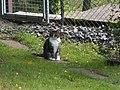 Katter (6061859059).jpg