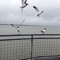 Kemah Boardwalk Seagulls.jpg