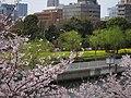 Kiba park , Koto ward - panoramio.jpg