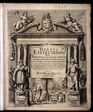Hortus Eystettensis - Image: Kilian, Wolfgang Hortus Eystettensis 2