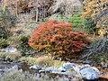 KiryuRiver Autumn.jpg