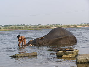 Kodumudi - Image: Kodumudi Temple Elephant