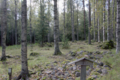 Kokkoniemenmäki 2.png