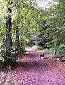Konzertwald goettelborn 01.JPG