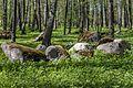 Koplipargi kivi. 11.jpg