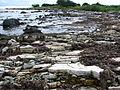 Kybassaare rannik 29.07.2010.jpg