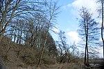 LSG Calenberger Leinetal - Am Weißen Berg - Hangwald (5).jpg