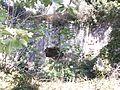 La Funtanazza (Monte Bonifato, Alcamo) 04.jpg