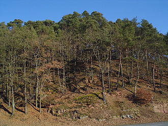 Forest degradation - Degraded forest in Lahnberge, Germany: the soil is being washed out due to lack of vegetal cover, some trees are losing ground and they appear to be sick (photo by Andreas Trepte).