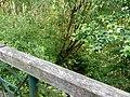 Landschaftsschutzgebiet Wäldchen bei Buer Melle Datei 23.jpg