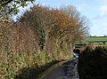 Lane near Shapley - geograph.org.uk - 1588918.jpg