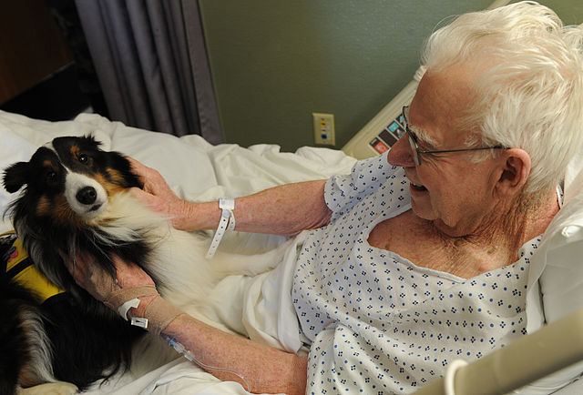 A therapy dog visiting an elderly man in a nursing home