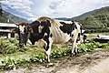 Lango, Paro, Bhutan (8026022616).jpg