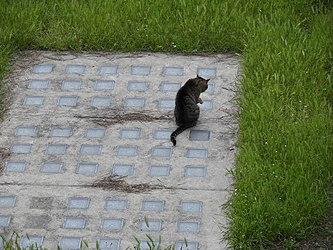Largo di Torre Argentina cats 2.jpg