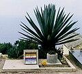 Le Corbusier grave.jpg