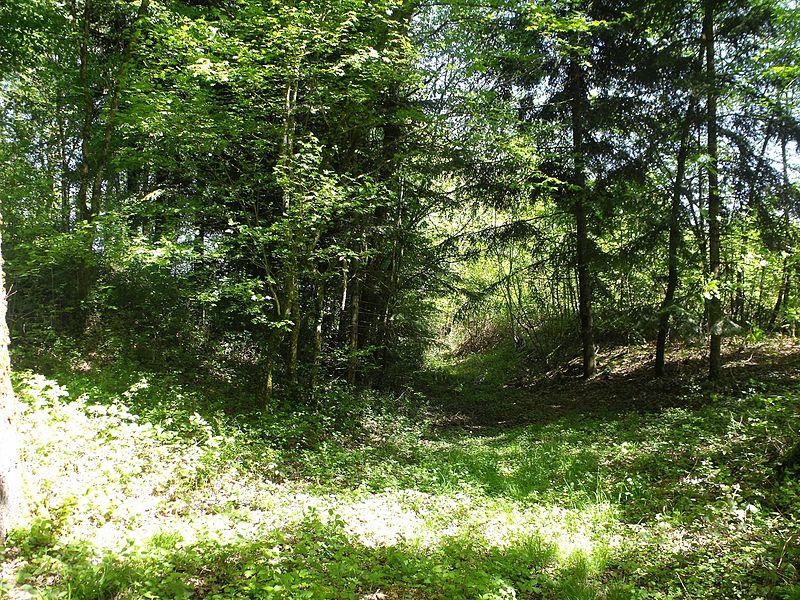 Motte castrale de Placey (Le Chatelard), Doubs, France