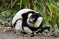 Lemur (26992587288).jpg
