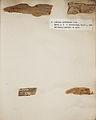 Lichenes Helvetici I II 1842 006.jpg