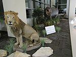 Lion and Hippo (LSB, BYU).jpg