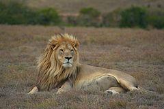 אריה טרנסוואל