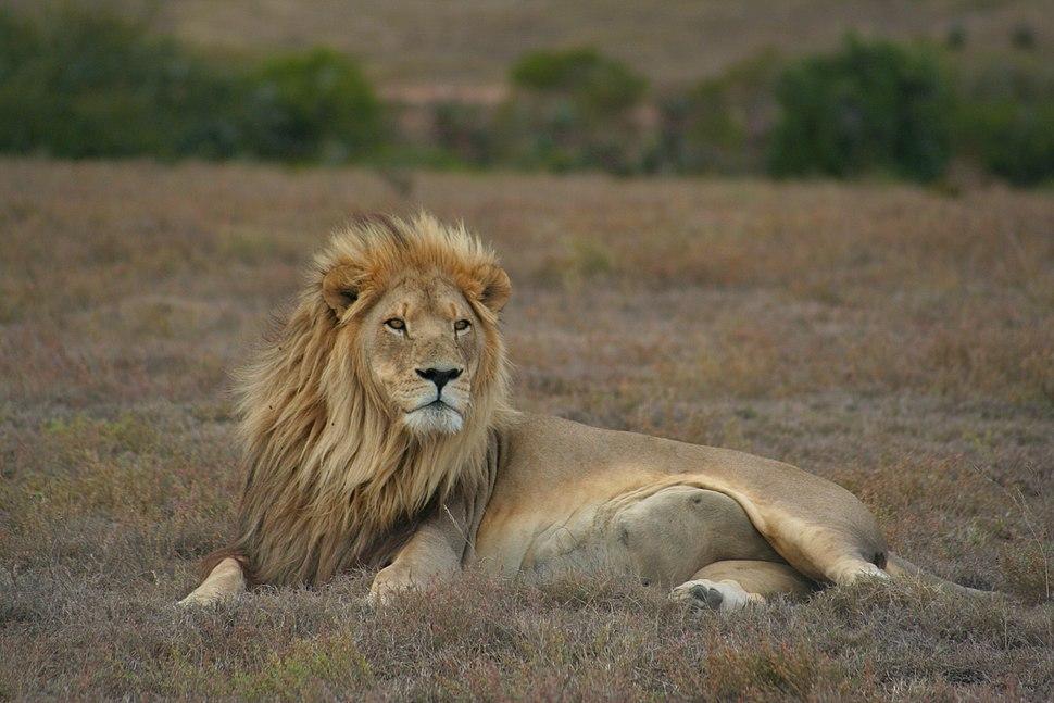 Lion pose (6649531395)