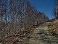 Lisina, Serbia - panoramio (5).jpg