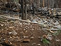Little Bear Trail flood damage (9358991119).jpg