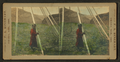 Little girls, from Robert N. Dennis collection of stereoscopic views.png