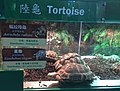 Live Tortoises Seized by the Hong Kong Government - Hong Kong's Agriculture, Fisheries and Conservation Department Visitor Center (37660358191).jpg