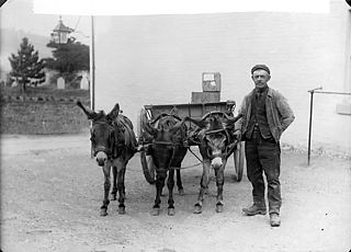 Llanfair carrier with his donkeys