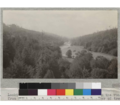 Looking down the Gualala River from a point on the road from Annapolis to the Coast. Showing character of tree growth-dense second growth with many old growth trees left from early logging interspersed. June 5, 1922.png