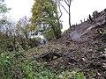 Loosing the leaves - geograph.org.uk - 1566012.jpg