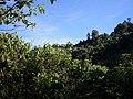 Los guaduales Balboa Cauca - panoramio (3).jpg