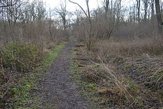 Lower Wood nature reserve in the United Kingdom