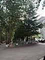 Ludong University 07.jpg