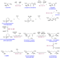 Lysine Biosynthesis.png