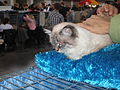 MTP Cat Show 2230090.JPG