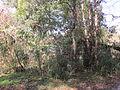 Magnolia Lane Plantation Outbuilding.JPG