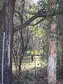 Magnolia Lane Plantation River Road 3.JPG