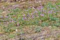 Main-Taunus-Kreis, Weilbacher Kiesgruben, Kiesgrube Flora.jpg