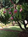 Mangoes in Nairobi - 2.jpg