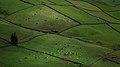 Manta de Retalhos - Ilha Terceira.jpg