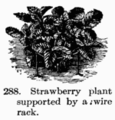 Manual of Gardening fig288.png