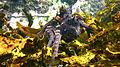 Maori Octopus-Octopus maorum (8378473607).jpg