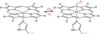Hemeprotein - Binding of oxygen to a heme prosthetic group, which would be part of a hemoprotein.