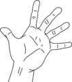 Measurements of the hand without the measurements.png