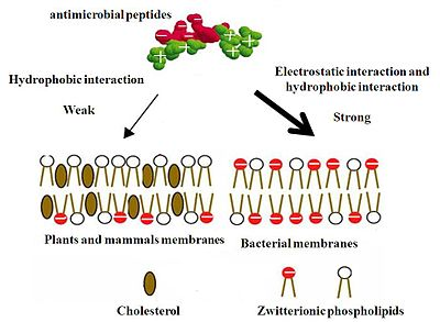 Probiotics and antimicrobial proteins impact factor