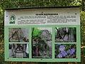 Medobory Nature Reserve (4).JPG